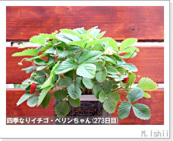 ペット栽培II(四季なりイチゴ)120