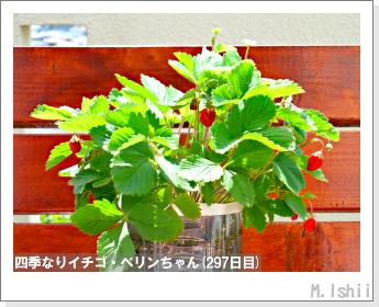 ペット栽培II(四季なりイチゴ)140