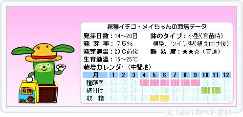 ペトさい(採種イチゴ)008