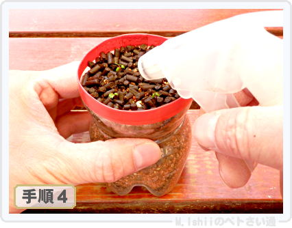 ペトさい(採種イチゴ・改)023