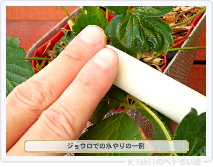 ペトさい(採種イチゴ・改)072