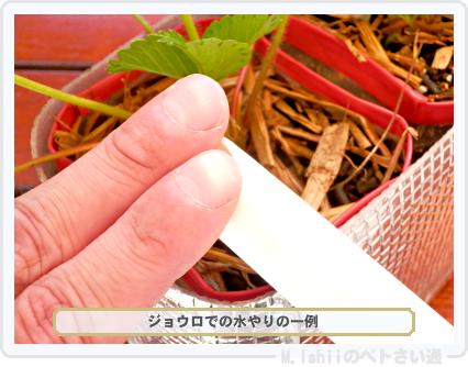 ペトさい(採種イチゴ・改)096
