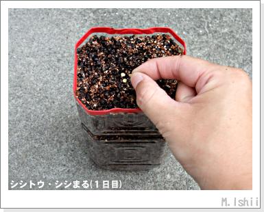 ペット栽培III(シシトウ)04