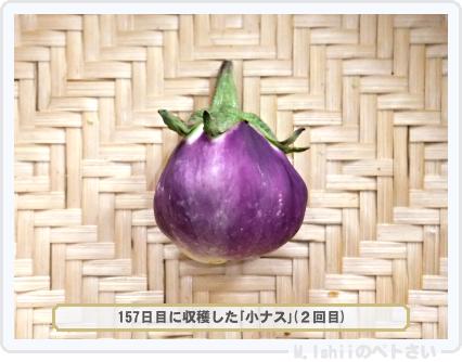 ペトさい(小ナス)45