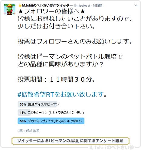 ピーマン栽培01