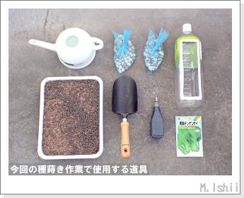 ペット栽培II(チンゲン菜)03