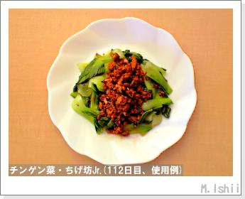 ペット栽培II(チンゲン菜)46
