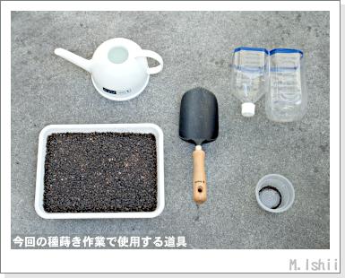 ペット栽培III(ミニちんげん菜)02