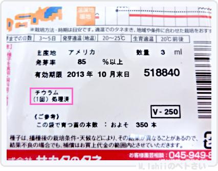 ペトさい(ミニチンゲン菜)02