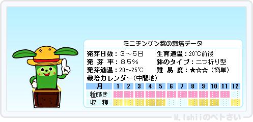ペトさい(ミニチンゲン菜)09