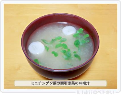 ペトさい(ミニチンゲン菜)26