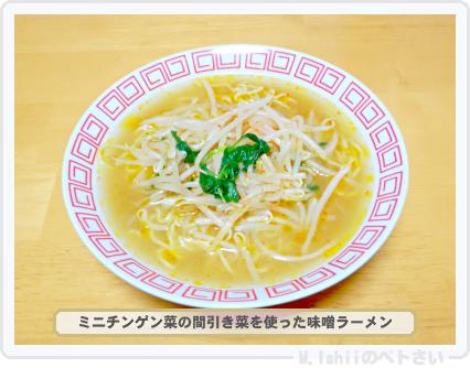 ペトさい(ミニチンゲン菜)27