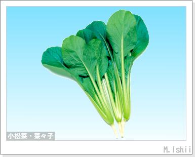 ペット栽培III(小松菜)01