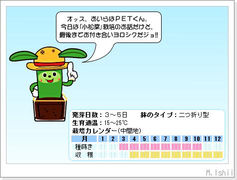 ペット栽培III(小松菜)16