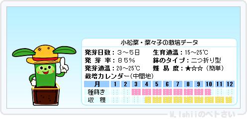ペトさい(小松菜)08