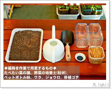 ペット栽培III(たべたい菜)03