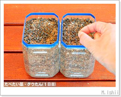 ペット栽培III(たべたい菜)06