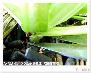 ペット栽培III(たべたい菜)25