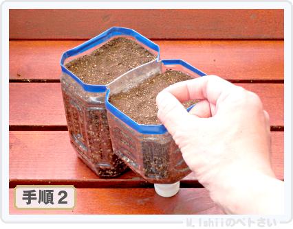 ペトさい(たべたい菜)06
