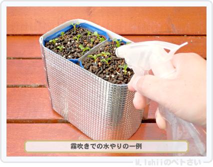 ペトさい(たべたい菜)24