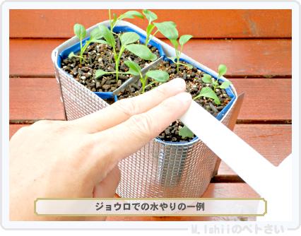 ペトさい(たべたい菜)29