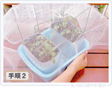 ペトさい(たべたい菜)36