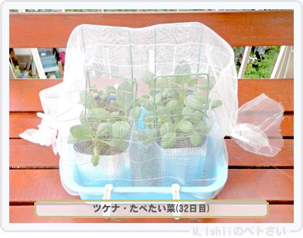 ペトさい(たべたい菜)40