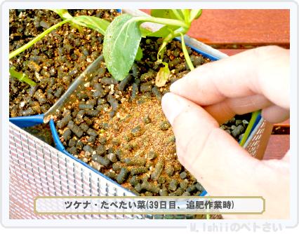 ペトさい(たべたい菜)44