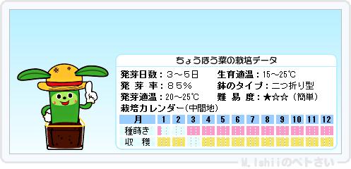 ペトさい(ちょうほう菜)08
