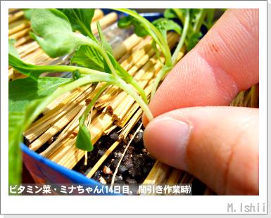 ペット栽培III(ビタミン菜)09