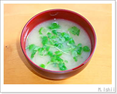 ペット栽培III(ビタミン菜)12