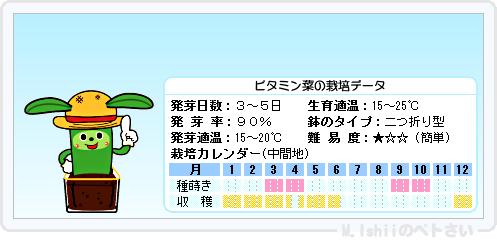ペトさい(ビタミン菜)15