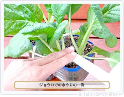 ペトさい(ビタミン菜)28