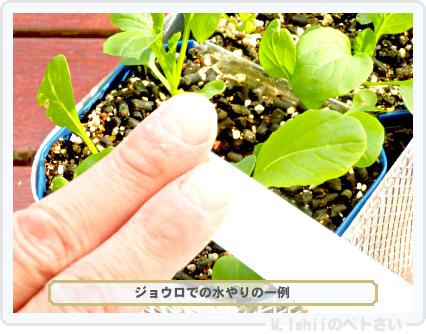 ペトさい(べんり菜)28