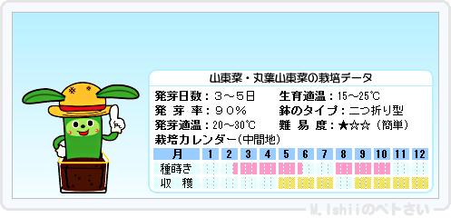 ペトさい(山東菜)08