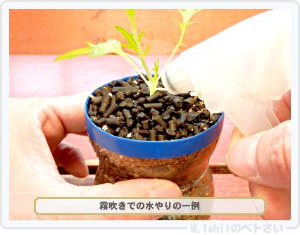 ペトさい(サラダ水菜・改)24