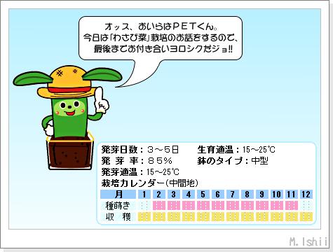 ペット栽培III(わさび菜・改)01