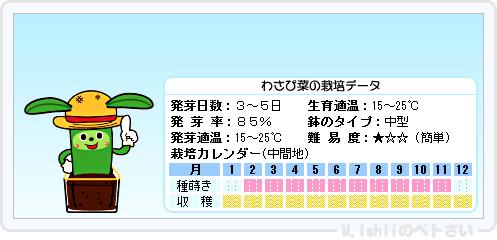 ペトさい(わさび菜)15
