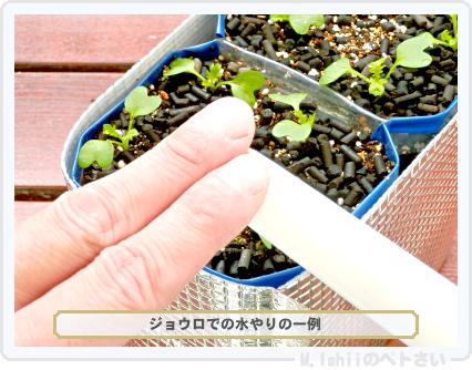 ペトさい(わさび菜・改)25