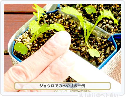 ペトさい(わさび菜・改)30