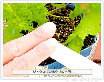 ペトさい(わさび菜・改)40