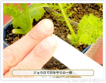 ペトさい(わさび菜・改)57