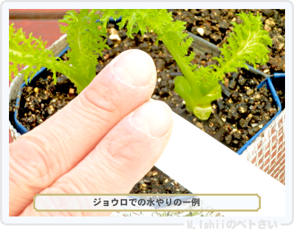 ペトさい(わさび菜・改)64