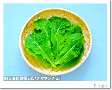 ペット栽培III(チマサンチュ)32