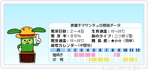 ペトさい(赤葉チマサンチュ)13