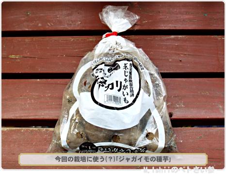 ジャガイモ栽培01