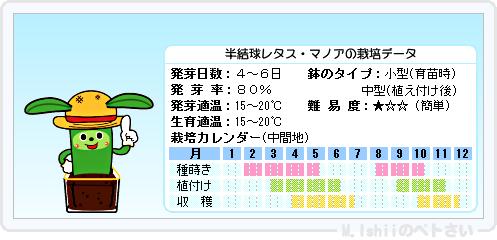 ペトさい(半結球レタス)14