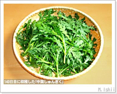 ペット栽培III(中葉しゅんぎく)35