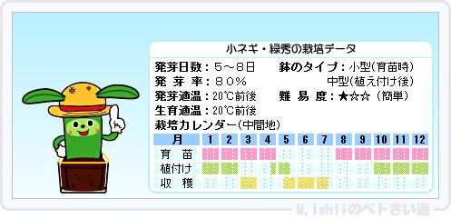 ペトさい(小ネギ)14