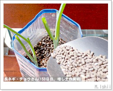 ペット栽培III(長ネギ)34